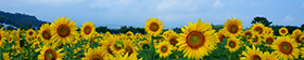 Latest News of the NPO Sunflower International Tourism Association